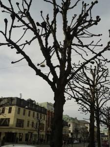 Ihanan synkät, lehdettömät, kummallisesti karsitut puut.